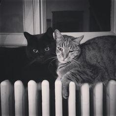 Cozy Evening #cat #instacat #gatto #gattonero #blackcat #mau #relax #heating #weekend #bw #blackandwhite #rovio