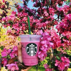 Image via We Heart It http://weheartit.com/entry/267994048/via/15110323 #flowers #juice #nature #photography #pink #starbucks #summer #tropical