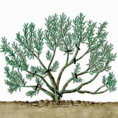 Supprimer les branches proches des souches - Rustica