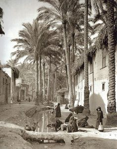 Marg, Egypt, 1920, Donald McLeish