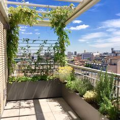 Rooftop Terrace Design, Terrace Garden Design, Rooftop Garden, Balcony Garden, Roof Garden Plants, Diy Garden Fence, Balcony Plants, Small Backyard Landscaping, Modern Landscaping