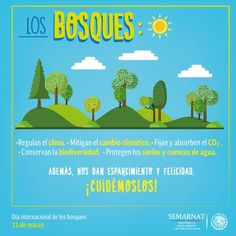 dia internacional de los bosques infografia - Google Search Forests, Trees, Google, International Day Of, Woodland Forest, Tree Structure, Woods, Wood