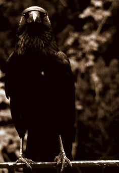 Season Of The Witch - A Southern Gothic Tale  - Raven