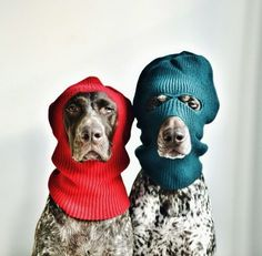 winter wear for the woofers.