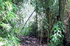 Eco camping De Wilp