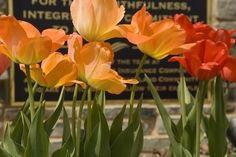 GodsDreamer's Photos - ViewBug.com