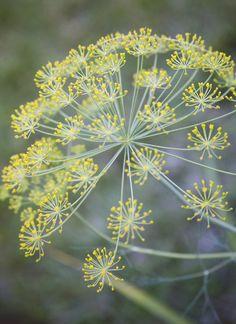 .gardening macro flower