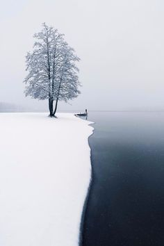 """maureen2musings: """" The moment of the first snow mikkolagerstedt """""""