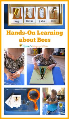 Please enjoy 8 activities for hands-on learning about bees that include language. Please enjoy 8 activities for hands-on learning about bees that include language. Please enjoy 8 activities for hands-on learning about bees that include language. Montessori Science, Kindergarten Science, Teaching Science, Science For Kids, Science Art, Science News, Insect Activities, Science Activities, Hands On Learning