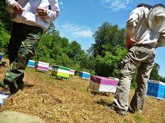 Επιθεώρηση στις καστανιές στα ορεινά της Πίνδου.