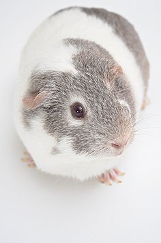 miss piggy / 11.366 by External Focus