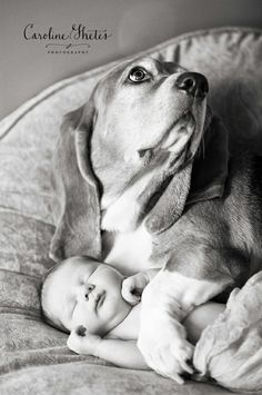 24 nouveau-nés et leurs chiens