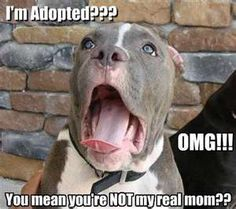 Adopted Dog | NuttyTimes – Funny Pics & More