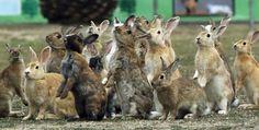 Bunny Island, Rabbit Island, House Rabbit, Pet Rabbit, Bbc, Baby Animals, Cute Animals, Japan Info, Wild Hearts