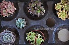 succulent baking garden - Google Search
