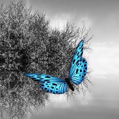 Photo Blue Butterfly by Josep Sumalla on Butterfly Kisses, Butterfly Print, Blue Butterfly, Butterfly Images, Beautiful Bugs, Beautiful Butterflies, Life Is Beautiful, Kandinsky, Pretty Photos