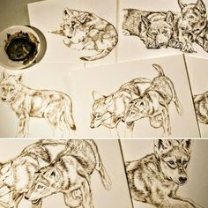 Wolf paintings in progress collage sepia watercolor on board Rebecca Latham  #wildlife #watercolor #art #animal #painting #miniature #artist #miniatureart #realism #animallovers #wolf #timberwolves #puppy #workinprogress #naturalism