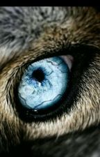 Wolf eye drawing, animals and pets, cute animals Wolf Spirit, My Spirit Animal, Beautiful Wolves, Beautiful Eyes, Beautiful Creatures, Animals Beautiful, Photo Oeil, Regard Animal, Animals And Pets