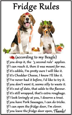 Are you interested in a Beagle? Well, the Beagle is one of the few popular dogs that will adapt much faster to any home. Beagle Hound, Beagle Dog, Beagle Funny, Funny Dogs, Cute Beagles, Cute Dogs, Hush Puppies, Dogs And Puppies, Doggies
