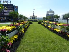 What every Preakness owner dreams of today.the walkway to the Winner's Circle at Pimlico Race Course. Race Horses, Horse Racing, Pimlico Race Track, Baltimore Skyline, Preakness Stakes, Race Tracks, Sport Of Kings, Thoroughbred Horse, Derby Party