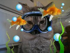 my cat likes to go scuba diving with the fish