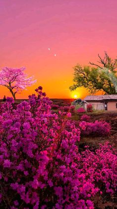 Beautiful Landscape Wallpaper, Beautiful Landscapes, Beautiful Gardens, Beautiful Photos Of Nature, Amazing Nature, Nature Aesthetic, Landscape Art, Nature Photography, Colorful Pictures