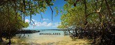 5 superpoderes de los manglares - Hablemos de cambio climático