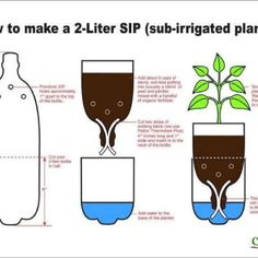 Have some 2 liter plastic bottles laying around? Transform them into pots for planting some new plants. It's sustainable and crafty!