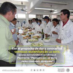 """Con el propósito de dar a conocer las ventajas nutritivas de la soya, jóvenes del CSAEGRO desarrollan el Proyecto """"Producción de Soya para Consumo Humano"""". SAGARPA SAGARPAMX #MéxicoSiembraÉxito"""
