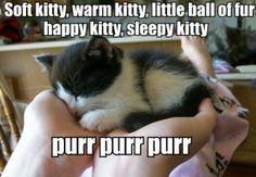 Is this little kitten called Sheldon? !!