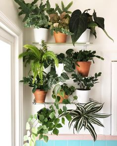 My bathroom plant shelves change with the growth of my plants. I decided to add . - My bathroom plant shelves change with the growth of my plants. I decided to add terra-cotta for a m - Bathroom Windows, Bathroom Plants, Bathroom Shelves, Bathrooms With Plants, Bathroom Flowers, Kitchen Plants, Kitchen Windows, Bathroom Ideas, Window Plants