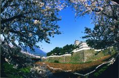 Shimabara Castle with Sakura 3 Shimabara Peninsula (Unzen City, Shimabara City, Obama Town & Minami-Shimabara City) Flowers / Castle ruins, temples and shrines