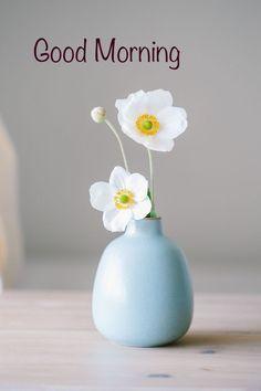 Flowers Nature, My Flower, Flower Vases, Flower Art, Beautiful Flowers, Cactus Flower, Exotic Flowers, Purple Flowers, Wallpaper Wall
