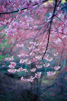 Calli strolled around a patch of blossom trees. She stopped and batted at a low hanging branch, sending petals everywhere. A full flower landed on her head without her noticing