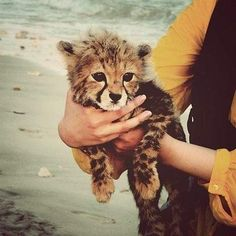 oh, you know, just hanging out at the beach with a cheetah cub.  No biggie.