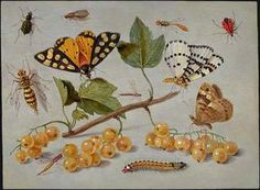 jan van kessel - Norton Safe Search