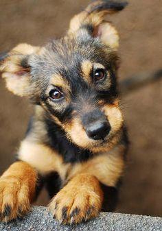 Rémisztő tünetek – egyre több kutya szenved hátsó végtagi bénulásban, még nem tudják mi okozhatja   ZAOL Rescue Dogs, Pet Dogs, Pets, Dog Dandruff, Calm Dog Breeds, University Of British Columbia, Dog Agility, Family Dogs, Happy Family