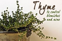 thyme to control blemishes and acne: recipes for thyme toner, mask, face scrub and pimple cream!