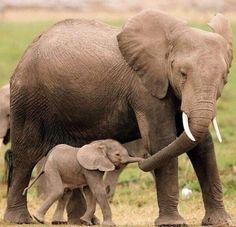 14 Beautiful Photos of Animal Moms With Their Babies