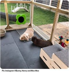 The Rabbit home that has the WOW factor – Rabbit cages outdoor- Rabbit cag. Rabbit Hutches Ideas T Rabbit Cages Outdoor, Rabbit Hutch Indoor, Indoor Rabbit Cage, Indoor Rabbit House, House Rabbit, Rabbit Shed, Rabbit Toys, Pet Rabbit, Diy Bunny Cage