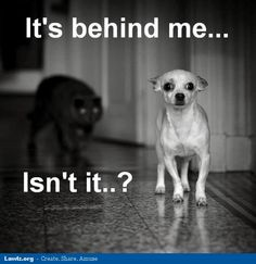 Google Image Result for http://www.lawlz.org/wp-content/uploads/2012/06/dog-meme-its-behind-me-isnt-it-cat.jpg