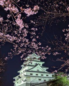いいね!205件、コメント3件 ― himac(@himac991)のInstagramアカウント: 「夜桜と、唐津城  両方欲張ると、難しい😩  居合わせた学生カメラマンさんから、唐津の良い所を色々教えて貰いました🙏💐 #唐津城 #唐津城と夜桜 #お城好きな人と繋がりたい #夜桜好きな人と繋がりたい…」 Shiro, City Photo, Castle, Instagram, Castles