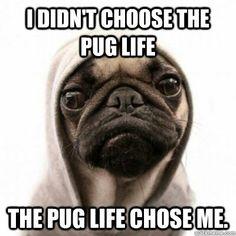 Pug :)