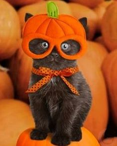 Cats in Halloween costumes are probably the cutest and funniest things you'll see all day! These Halloween costumes for cats are so cute! and zoom flash enemy, people and christmas pics of santa and reindeer singing. Animals And Pets, Baby Animals, Funny Animals, Cute Animals, Funny Cats, Funniest Animals, Cute Cats And Kittens, Cool Cats, Kittens Cutest