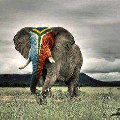 South African Flag. From Afrolemodele