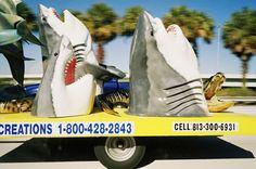 Ben Pier: Sharks