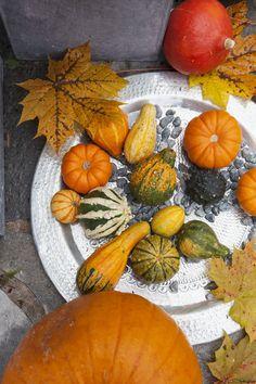 Pyntegresskar finnes i mange forskjellige farger og fasonger.