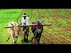 Great Video for Ch. 4 Properties of Water-Chemistry of Foods--Irrigation