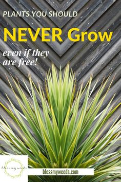 Save yourself a huge headache by avoiding plants that are obnoxious and have a mind of their own. There are some plants you should never grow and if you read this post you will learn about 10 of them why you should never grow them.#plantsyoushouldnevergrow #avoidgrowingtheseplants #planttips #gardeningtips #beesandrosesblog Full Sun Landscaping, Farmhouse Landscaping, Low Maintenance Landscaping, Front Yard Landscaping, Wisteria Tree, Landscape Curbing, Cascading Flowers, Backyard Water Feature, Plant Guide