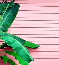 There's an Instagram account that exclusively posts plants against pink walls - Vogue Living